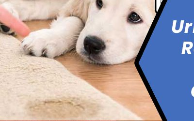 How To Remove Urine Stains and Odor From Carpet